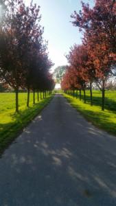 foto-bomenlaan-169x300